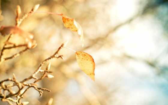 природа, листва, iphone, макро, дерево, листочки, трава, желтые, прожилки, осень, branch,