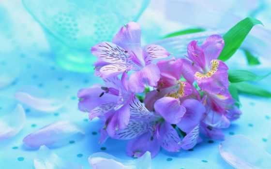 cvety, нежные, цветы, purple,