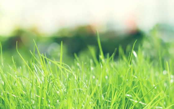 природа, summer, зелёный, трава, sun, день, trees,
