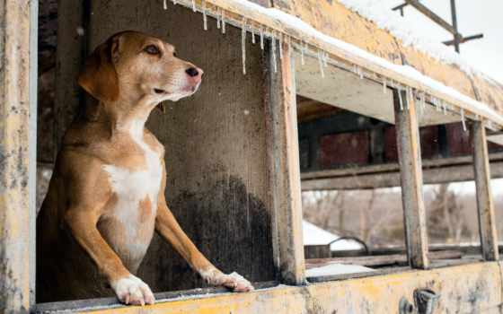 собака, out, окно