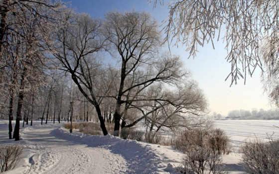 winter, снег, trees, природа, года, time, season, пейзажи -, природе, landscape, кошки,