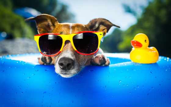 очки, собака, очках, собаки,