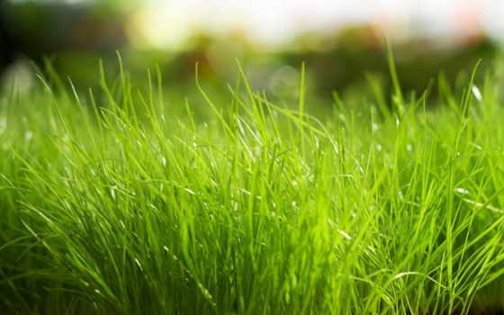 трава, широкоформатные