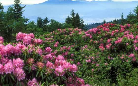 cvety, сайте, горах