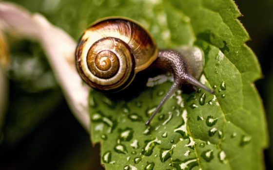 макро, snail, лист, капли, картинка, воды, water,