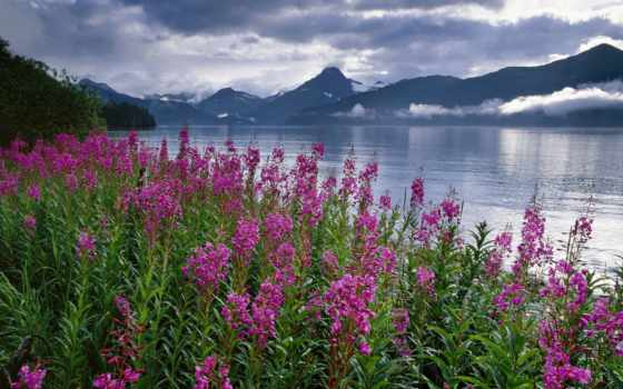 аляска, fireweed, pinterest, travel, gypsy, you, об, treasures, try,