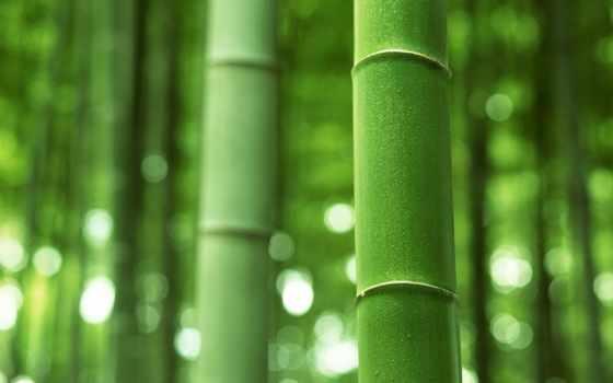 бамбук, бамбука, лес,
