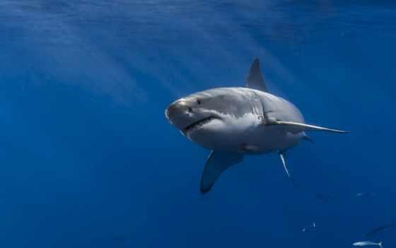 акула, акулы, zhivotnye