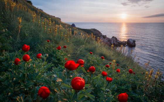 cvety, море, sun, flowers, берег, фото, oblaka, темы, птицы, взгляд,