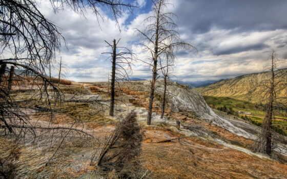 pine, free, more, https, фотографий, classicalvault, patreon, www,