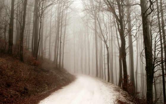 forest, природа, день, зимний, туман, дорога, path,