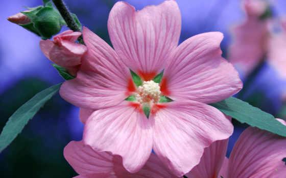 resimleri, çiçek, flowers