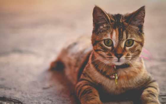 gatos, gato, que, adoptar, medellín, para, debes, antes,