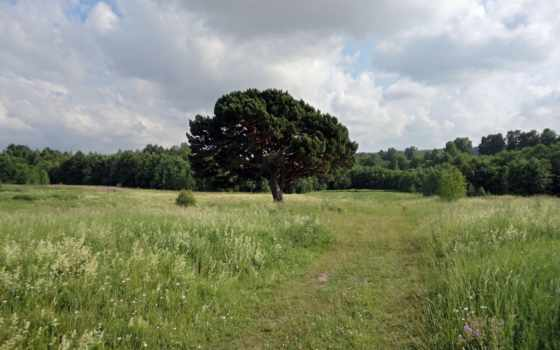 трава, кусты, дерево, дорога, oblaka, bush, pine, лес,