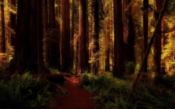 redwood, лес, landscape, природа, pixels, тропинка, california,