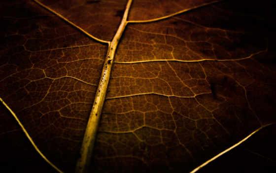 plain, leaf, браун, картинка, лист, макро, miscellaneous, dry,
