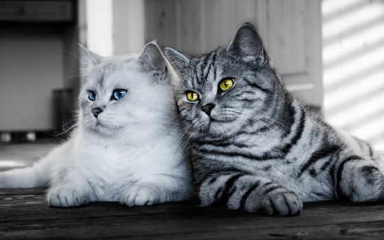 кошки, взгляд, zhivotnye, кот, коты,