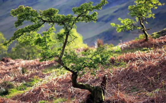pin, pinterest, desktop, природа, поле, flora, trees,