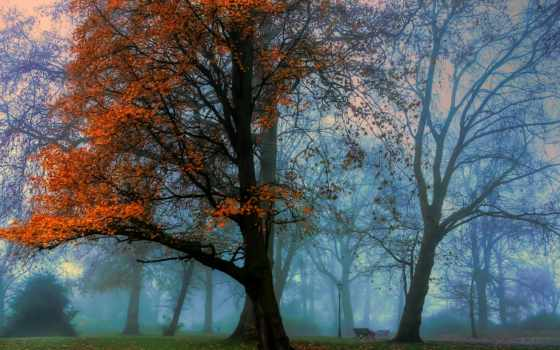 mac, дерево, trees, осень, more, pinterest, tapety, фильмы,