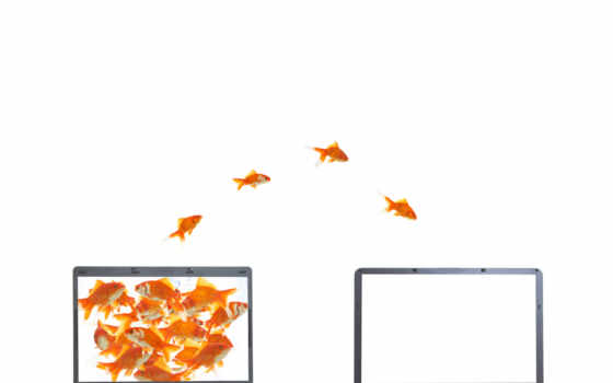 goldfish, notebook
