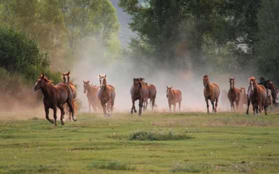 бег, кони