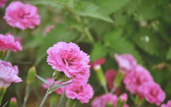 марта, цветы