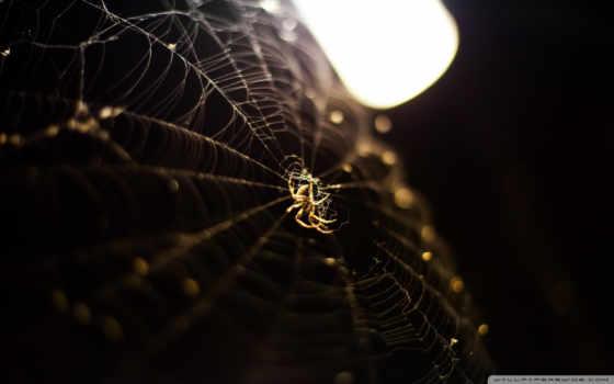 паук, web, янв