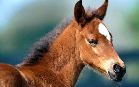 жеребенок, zhivotnye, лошади