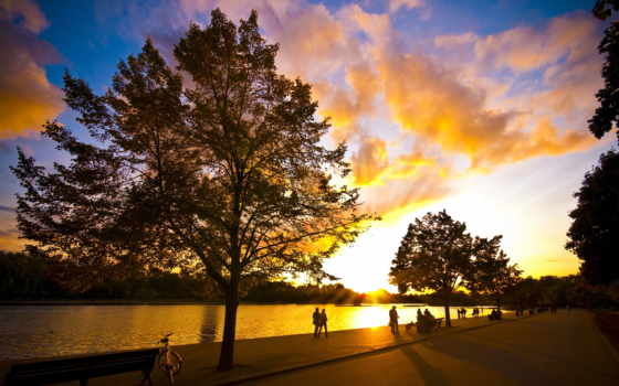 park, деревя, фотографий