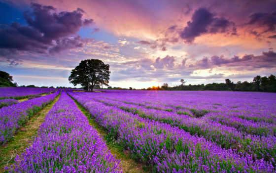 природа, красивые, природы Фон № 108102 разрешение 1920x1200