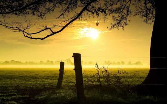 winter, słońca, сыны
