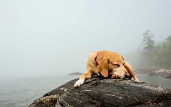 собаки, aliexpress, туман, цен, comparison, уже, amazing, загружено,