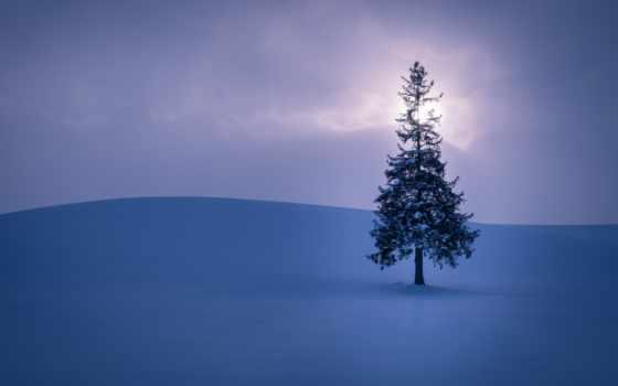 ёль, природа, desktop, winter, smartphone, free, мост, снег,