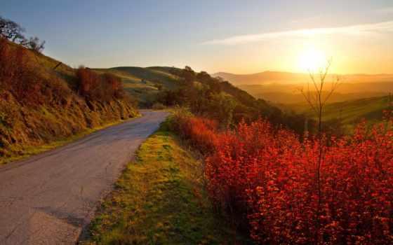 осень, дорога, листва