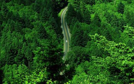 лес, яndex, дорога, машина, коллекция, природа, коллекциях, сквозь, едет,