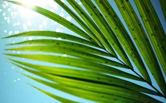 листва, palm, небо, sun, summer, макро