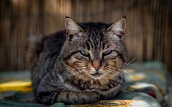 кот, котенок, сладкое, domestic, feline, мех, ди, pet, canon, фото, id