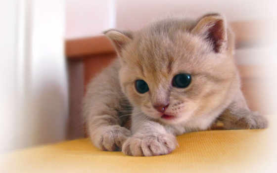 котенок, обои, котята, котёнок, маленькие, животны