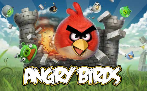 angry, birds Фон № 8322 разрешение 2560x1600