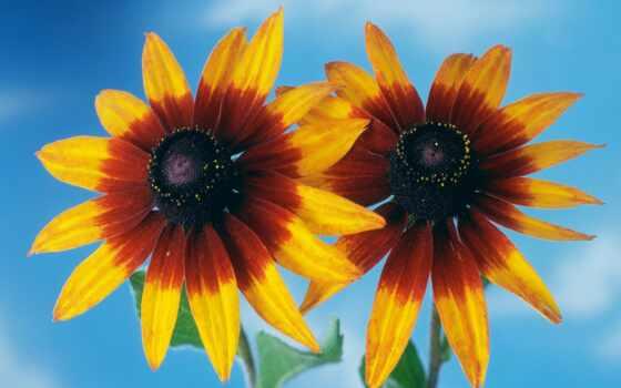 цветы, подборка, красивых, девушек, flowers, king, шаман, hana,