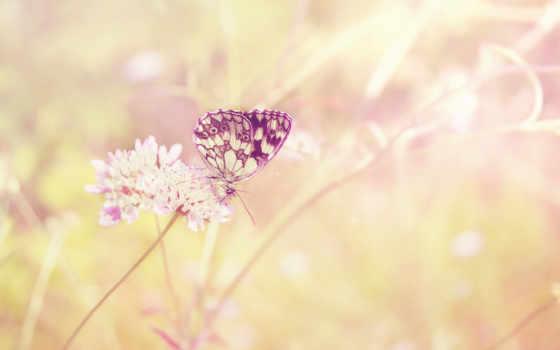цветы, но, дней