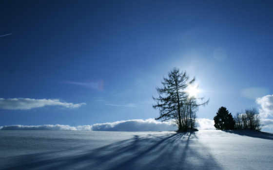 зимний, солнце, дерева