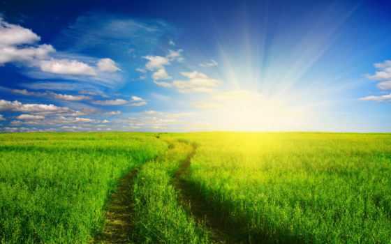 трава, зелёный, free