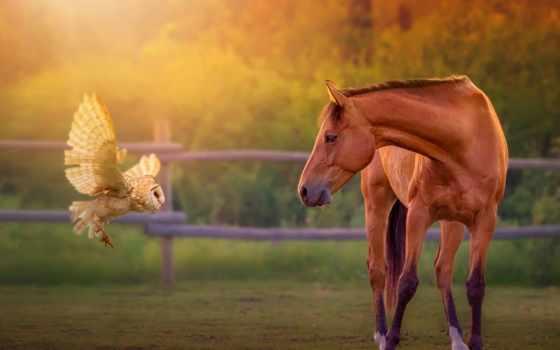 лошадь, сова, перо, лошадей,