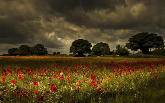 поле, маки, landscape, природа, цветы, небо, маковое, oblaka,