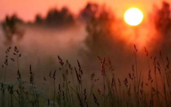 закат, лес, трава, sun, туман, природа, лесу, красивые, солнца, oblaka, море,