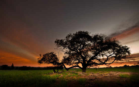 manzara, resimleri, поле, небо, дерево, вечер, природа, doğa, indir,