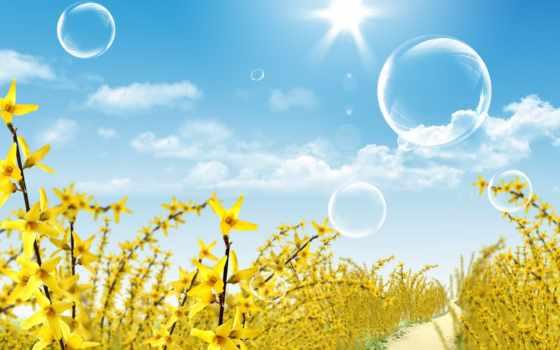 cvety, медведь, поляна, мэри, цветочная, tochka, прикольные, oboi,