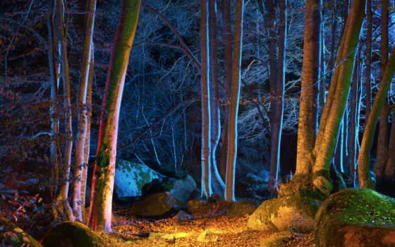 лес, ночь, растровый, освещенной, клипарт, ярким, small, поляной, светом,