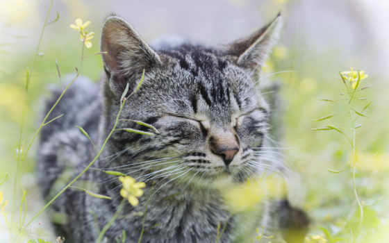 кот, серый, трава, cvety, полоску, картинка,